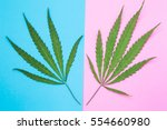 Male And Female Cannabis Or...