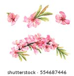Stock photo almond blossom set of watercolor pink flowers 554687446