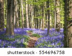 Bluebells Carpet Under Halle...