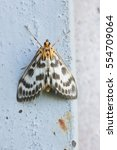Small photo of Butterfly of the family of moth (lat. Geometridae)