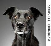 portrait of an adorable mixed... | Shutterstock . vector #554735890
