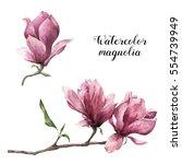 Watercolor Magnolia. Hand...