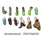 Monarch Butterfly Life Cycle ...