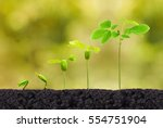 Agriculture. Plant Seedling....
