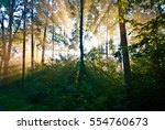 Stock photo sunrise in a forest 554760673