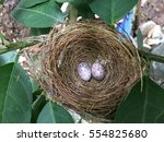 Bird Eggs On Nest