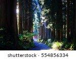 path in woods | Shutterstock . vector #554856334