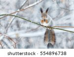 Portrait Of Gray Squirrel In...