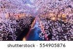 cherry blossom or sakura at... | Shutterstock . vector #554905876
