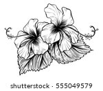 hibiscus flowers in a vintage... | Shutterstock .eps vector #555049579