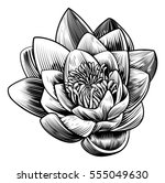 a water lily lotus flower in a... | Shutterstock .eps vector #555049630