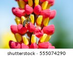 Wild Bee Pollinating Red Yello...