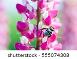 Wild Bee Flying Around Flowers...