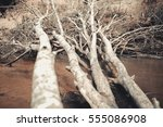falling old trees. forest river. | Shutterstock . vector #555086908
