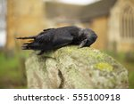A Dead Crow On A Gravestone In...