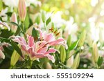 Group Of Pink Lilly Flower In...