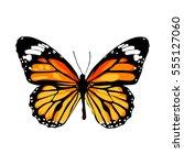 beautiful monarch butterfly ... | Shutterstock .eps vector #555127060