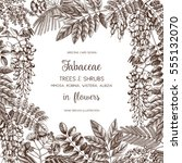 vintage trees and shrubs in... | Shutterstock .eps vector #555132070