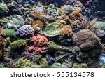 tropical corals in large... | Shutterstock . vector #555134578
