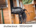 Friesian Stallion Head Looking...