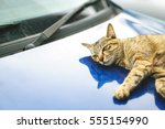Cat Lying Down On Car Hood