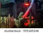 Iguana Sits On A Stump In The...