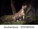 one hyena looking at the camera ... | Shutterstock . vector #555189334