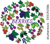 hand drawn outline berries... | Shutterstock .eps vector #555192586