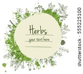 herbs and flowers painted green ... | Shutterstock .eps vector #555225100