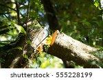 tree cut. falling down action.... | Shutterstock . vector #555228199