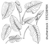 hand drawn branches and leaves... | Shutterstock .eps vector #555238984