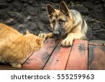 Stock photo dog chasing a cat 555259963