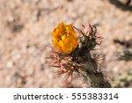 Yellow Cactus Flowers In Desert.