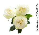 Stock photo white rose flowers on a white background 555407956