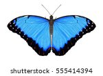 A Beautiful Blue Morpho...