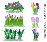 spring flowers growing in the... | Shutterstock .eps vector #555421420