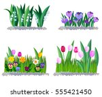 spring flowers lily of the... | Shutterstock .eps vector #555421450