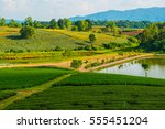 tea farm with lake in thai ... | Shutterstock . vector #555451204