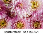 beautiful flowers background... | Shutterstock . vector #555458764