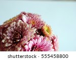 beautiful flowers background... | Shutterstock . vector #555458800