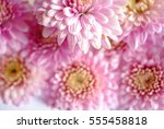 beautiful flowers background... | Shutterstock . vector #555458818