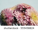 beautiful flowers background... | Shutterstock . vector #555458824
