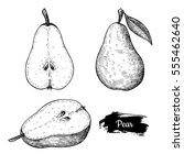 hand drawn sketch fruit pear.... | Shutterstock .eps vector #555462640