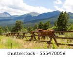 Horses Behind A Log Fence...