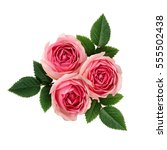 pink rose flowers arrangement... | Shutterstock . vector #555502438