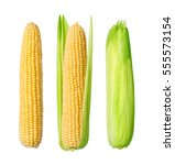 corn isolated on a white... | Shutterstock . vector #555573154