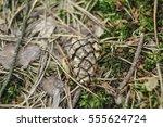 blurred ground in a summer... | Shutterstock . vector #555624724