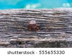 A Weathered And Rusted Bolt In...