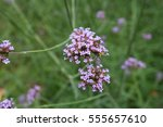 small flowers | Shutterstock . vector #555657610