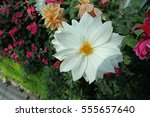 white flower | Shutterstock . vector #555657640